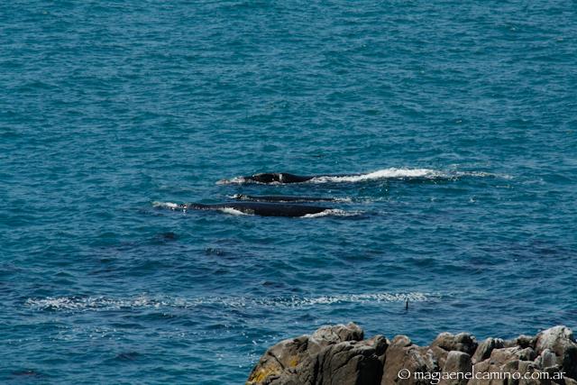 ballenasengaansbaii