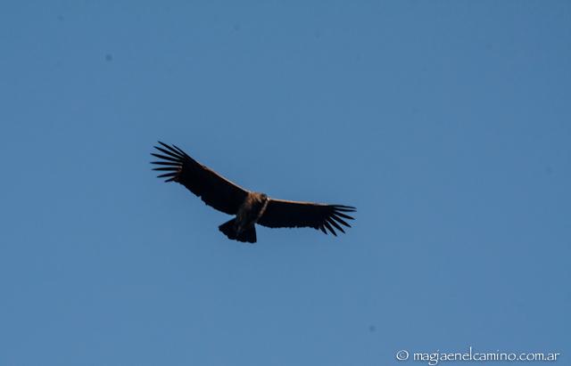 vuelo de condor 2